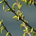 #wiosna #rośliny #kwiaty #krzew