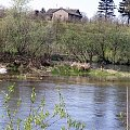 #zielone #wiosna #łabędź #łabędzie #rzeka #rzeką #łąka