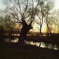 #ZachódSłońca #narew #drzewo #niebo