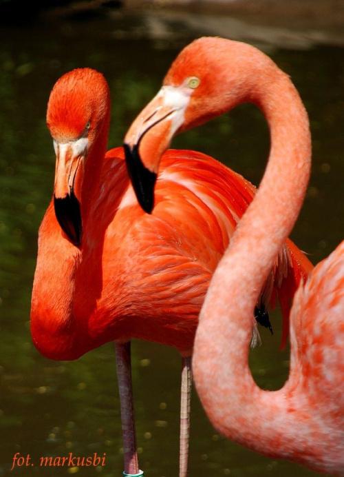 flamingi zoo Ostrava... #ptaki #zoo