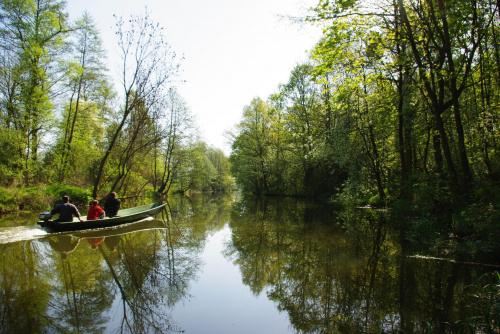 #wiosna #rzeka #Noteć #las #krajobraz #natura