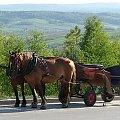 #GóryŚwiętokrzyskie #ŚwiętyKrzyż #konie #powóz