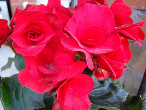 Piękny ma kolorek. #kwiaty
