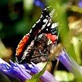 bo mi się to zdjęcie podoba:) #owady #motylki