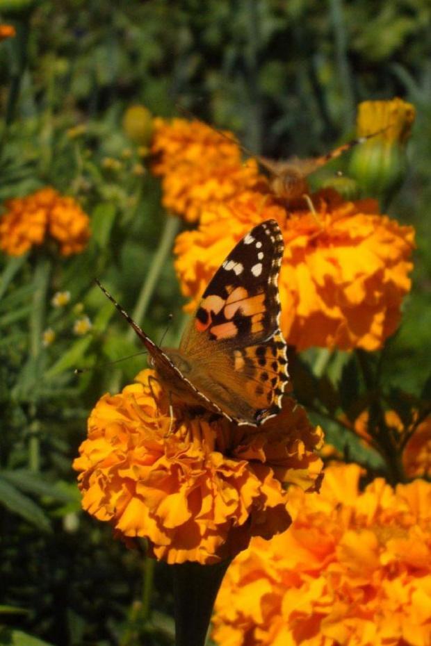 #lato #ogród #kwiat #niebo #natura