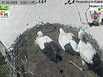 http://images48.fotosik.pl/169/5efa1de5c12c6436m.jpg