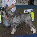 Trels Jakobiniecgelis 1 exc klasa championów psy