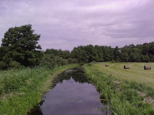 #kanał #łąka