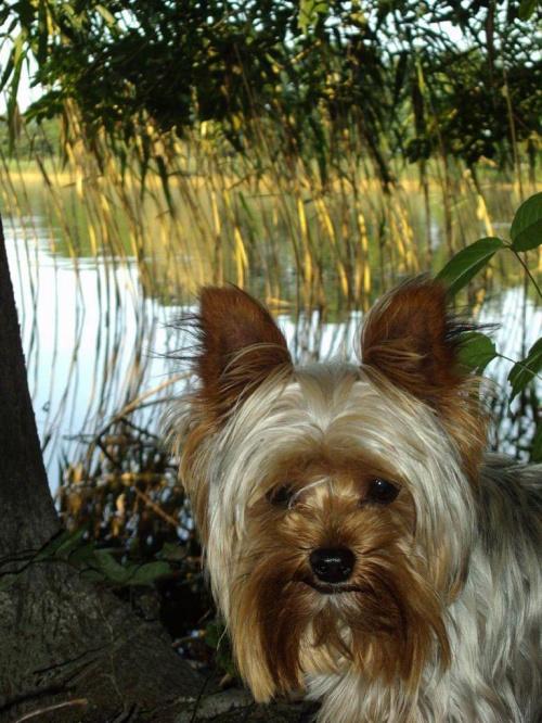 Gucio na łonie natury:) #Pies #natura #zwierzę