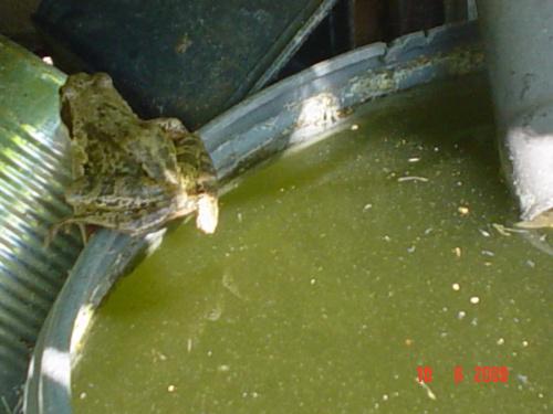 Lokatorka beczki z wodą na działce.