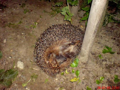 w nocy zawitał do mego ogródka dobrze że miałam komórkę