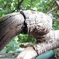 #makro #konar #przyroda #drzewo #wiosna
