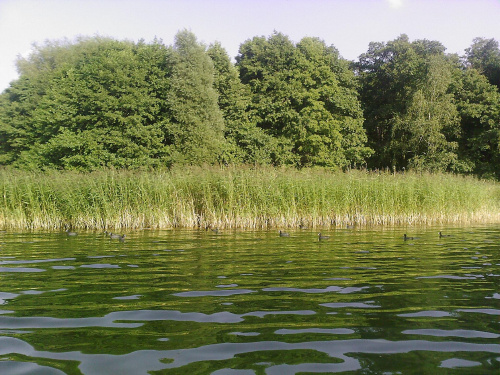 #jezioro #trzciny