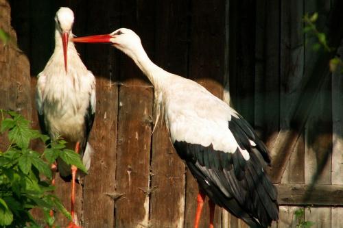 #zoo #bocian #bociany