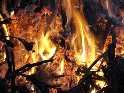 #ogień #płomień #żar