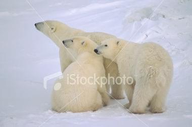 http://images48.fotosik.pl/243/b50115b2c6c9923d.jpg