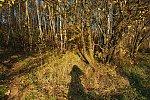 http://images48.fotosik.pl/26/0ca4aa0c97ebf049m.jpg
