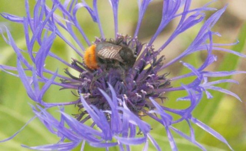 #przyroda #makro #owady #kwiaty