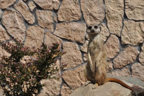 #przyroda #zwierzęta #zoo