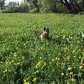 #kwiatki #kwiaty #łaka #owczarek #owczarki #OwkczarkiNiemieckie #pieski #psiaki #psy