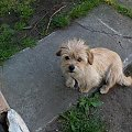 Mój psiak Brylant ... :)) #pies #psiak #pupilek #pisior #brylant #dog #pieszczota