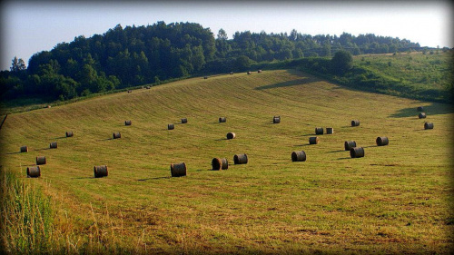 łąka w Krakowie