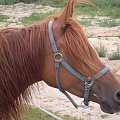 #koń #konie #Blanka #kasztan #kasztanka #kantar #portret #ruda #piękna