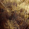 pajęczynki #pajęczyna