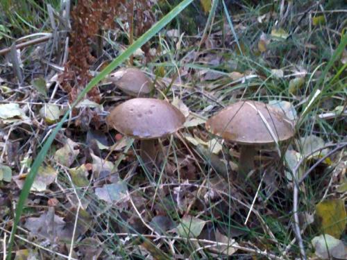 http://images48.fotosik.pl/432/43ba430afb1dcee5med.jpg