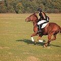 ucieczka #konie #wyścigi #huberus