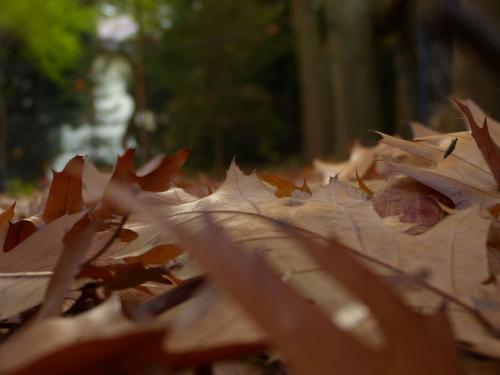 Jesienne liście #jesień #liście