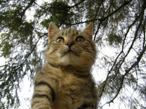 Kot, na gałęzi... #Kot #gałąź #drzewo