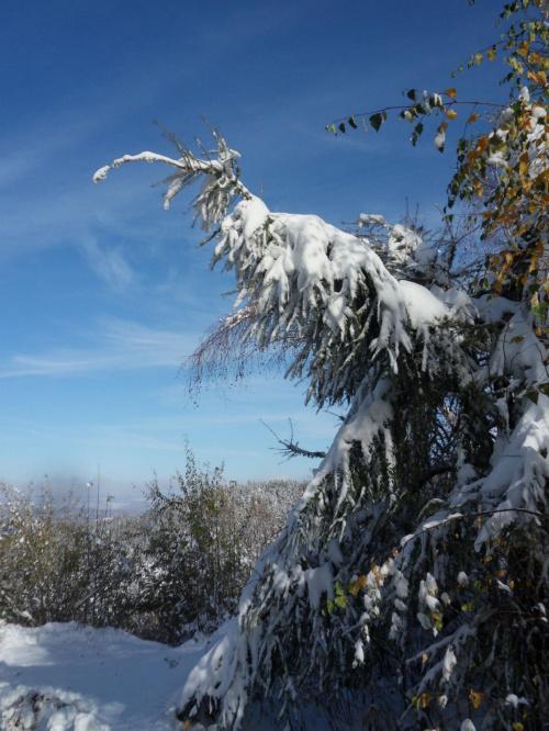 Jesień to czy zima ? :) #góry #jesień #listopad #śnieg