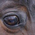 #koń #spojrzenie #odbicie
