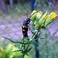 #owad #makro #przyroda