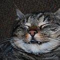 Mój Kot :) Ryszard :D #kot #zwierze #ryszard