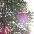 #Drzewica #Inowłódz
