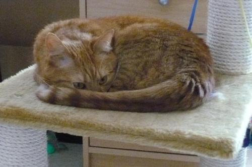 """""""Jakby co - śpię .. """" #zwierzeta #kot"""