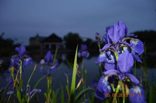 :) #kwiaty