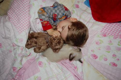 http://images48.fotosik.pl/74/ef8df3e06a475134med.jpg