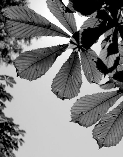 Łąki, pola, lasy przemierzone rowerem...zamiast km na liczniku...trochę nowych zdjęć :D #łąka #pole #maki #mak #natura #przyroda #owady #makro #kościół #BiałoCzarne #baszta #kwiaty #trawa