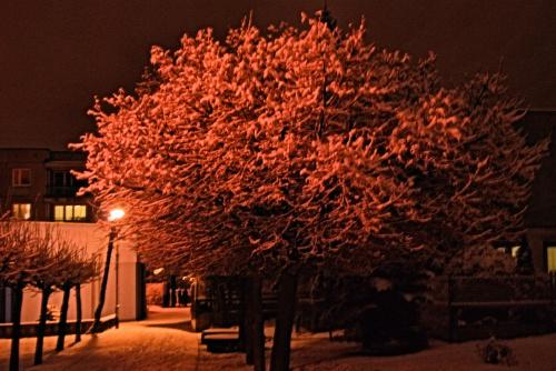 Zdjęcie zasypanego drzewa w Zamościu :D #Drzewo #światło #zima #śnieg #lampa #Zamość