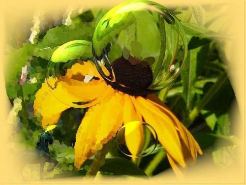 Wariacje na temat rudbekii-powiększone przez szklane kule #przeróbki #inaczej #rudbekia #kwiat #SzklaneKule #konik