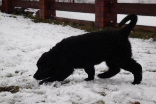 Czarunia na sniegu :)