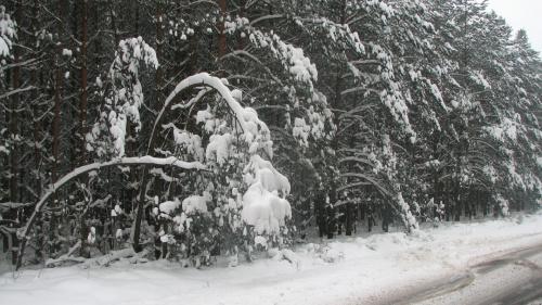 zima... #zima #snieg #drzewa #widok #plener