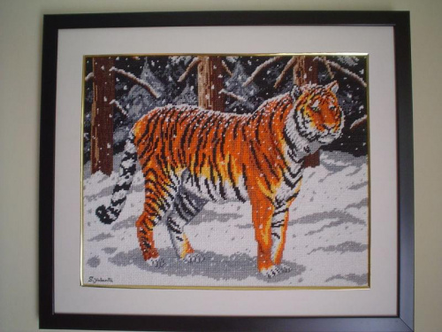 Tygrys Syberyjski. #DzikiKot #las #noc #snieg #tygrys #zwierzeta